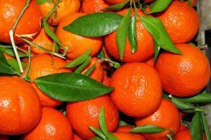 Jakie są minerały i witaminy w mandarynkach