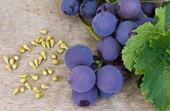Czy można jeść winogrona z pestkami?
