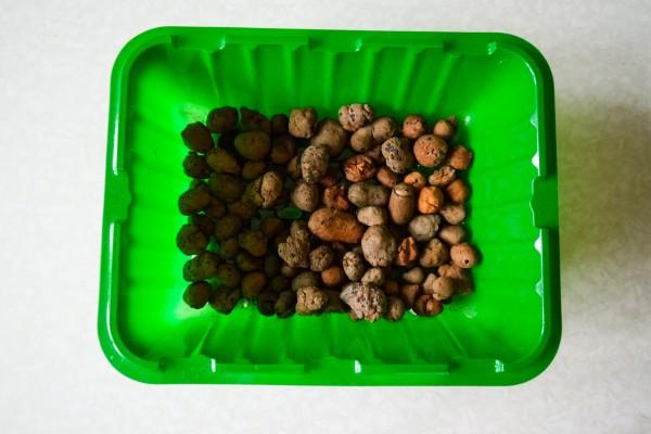 Optymalny termin sadzenia tureckich goździków na sadzonki